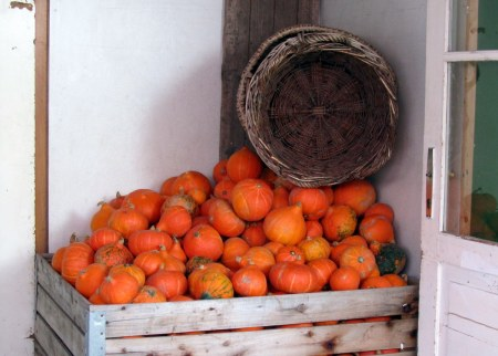 Pumpkins are a local specialty.