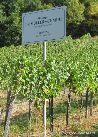 Every vineyard has a sign telling you where you can go to drink or buy the wine.
