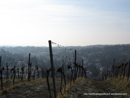 Vineyards are kind of cool-looking, even in winter.