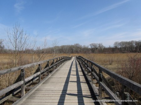 There is an extensive wooden pathway built over this part of the wetland.
