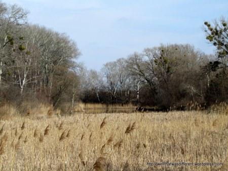 Wetland meadow.