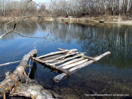 These Austrian beavers must be really smart.  They have started to build a raft!