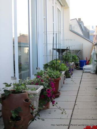 The big picture--lucky for me, this terrace faces southwest.