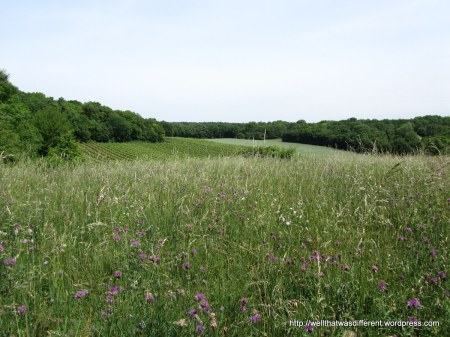 "A ""wiese"" or meadow."