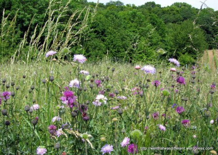 Lots of wildflowers and bees.