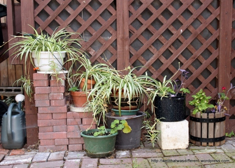 Recycled brick patio.