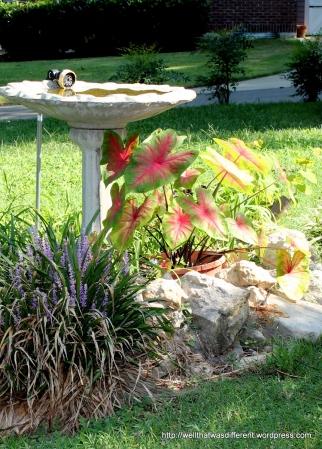 Birdbath with caladiums.