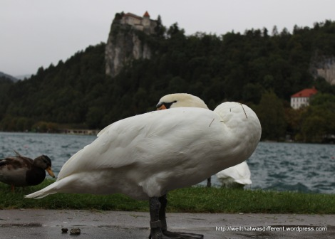 Even the swans were having none of it.