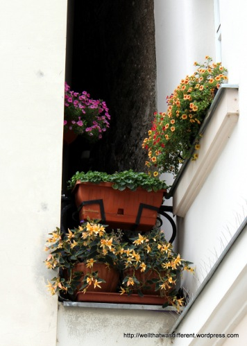 Flowers in a nook between two old buildings. Beats me how they water them.
