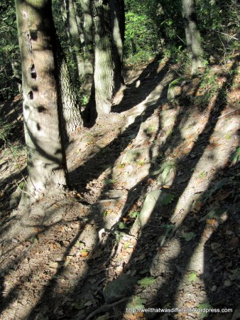 The path down was dodgy.  Usually they are better, but this one was pretty hard on the knees.