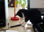 That's OK, I didn't need that pen anyway.
