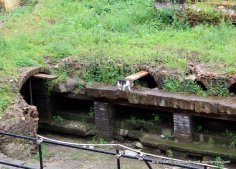 These ruins were inhabited by lots of cats!