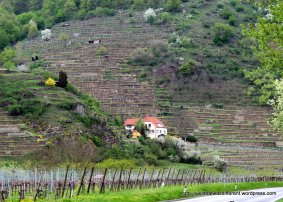 Most of the Wachau is devoted to wineries with ancient stone terraces climbing the hills