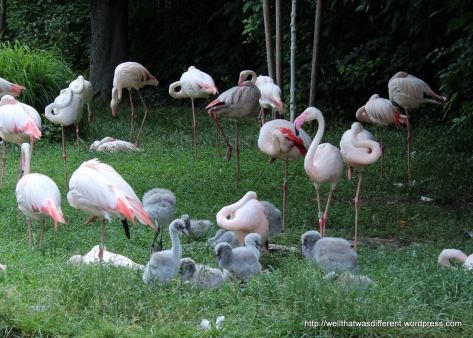 Flamingo nursery.