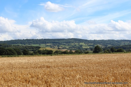 Wheat field in the Wye Valley.