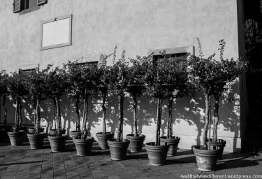 The Villa-fruit trees.