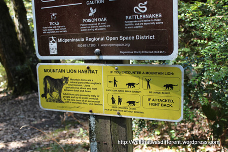 We did not see any mountain lions, but we were glad to be prepared, just in case. Yikes.