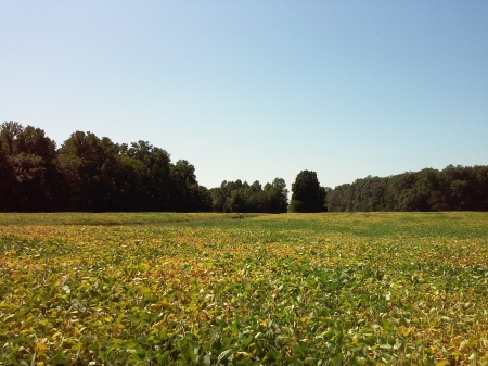 Lots of fields, birds, bugs, and butterflies.