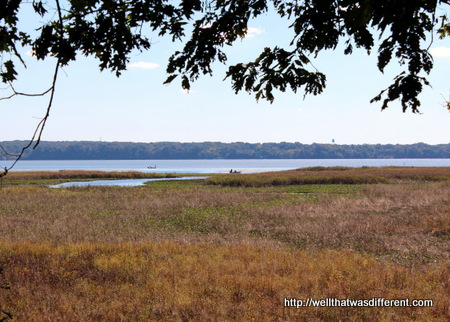 Seagulls, egrets and more  in the marshes along the Potomac.