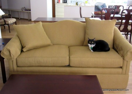 Sadie approves of the new nubbly sofa.