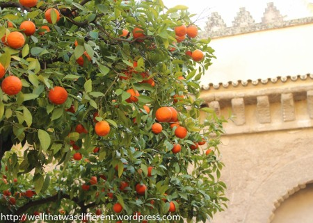 Orange trees in the courtyard of the Grand Mosque.