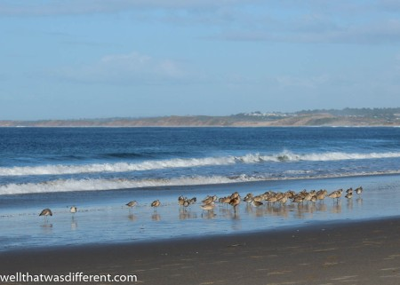 Sea birds on the beach.