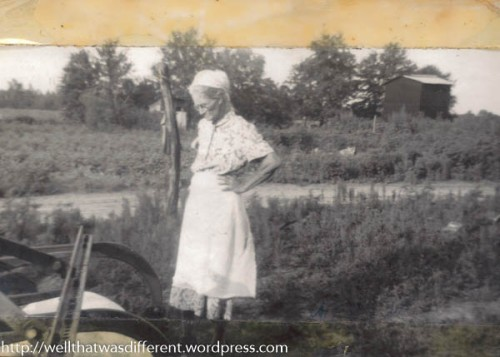 My great-grandmother, Palma Lee Lashley Bembry, on her north Florida farm.