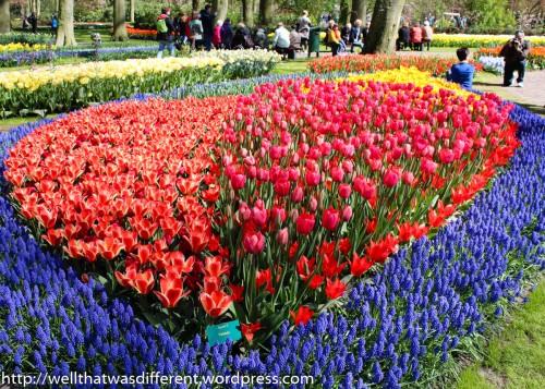 Big tulip heart.